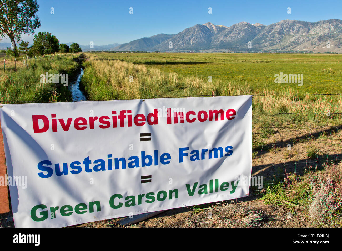 Irrigated pasture field  'Farming in Carson Valley'. - Stock Image