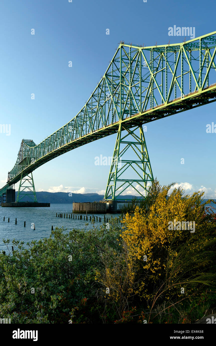 Astoria-Megler Bridge and yellow flowers, Columbia River, Astoria, Oregon USA - Stock Image
