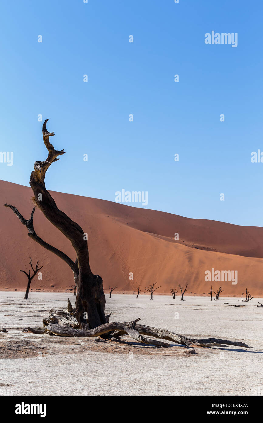 beautiful sunrise landscape of hidden Dead Vlei in Namib desert with dead acacia tree, best place of Namibia - Stock Image