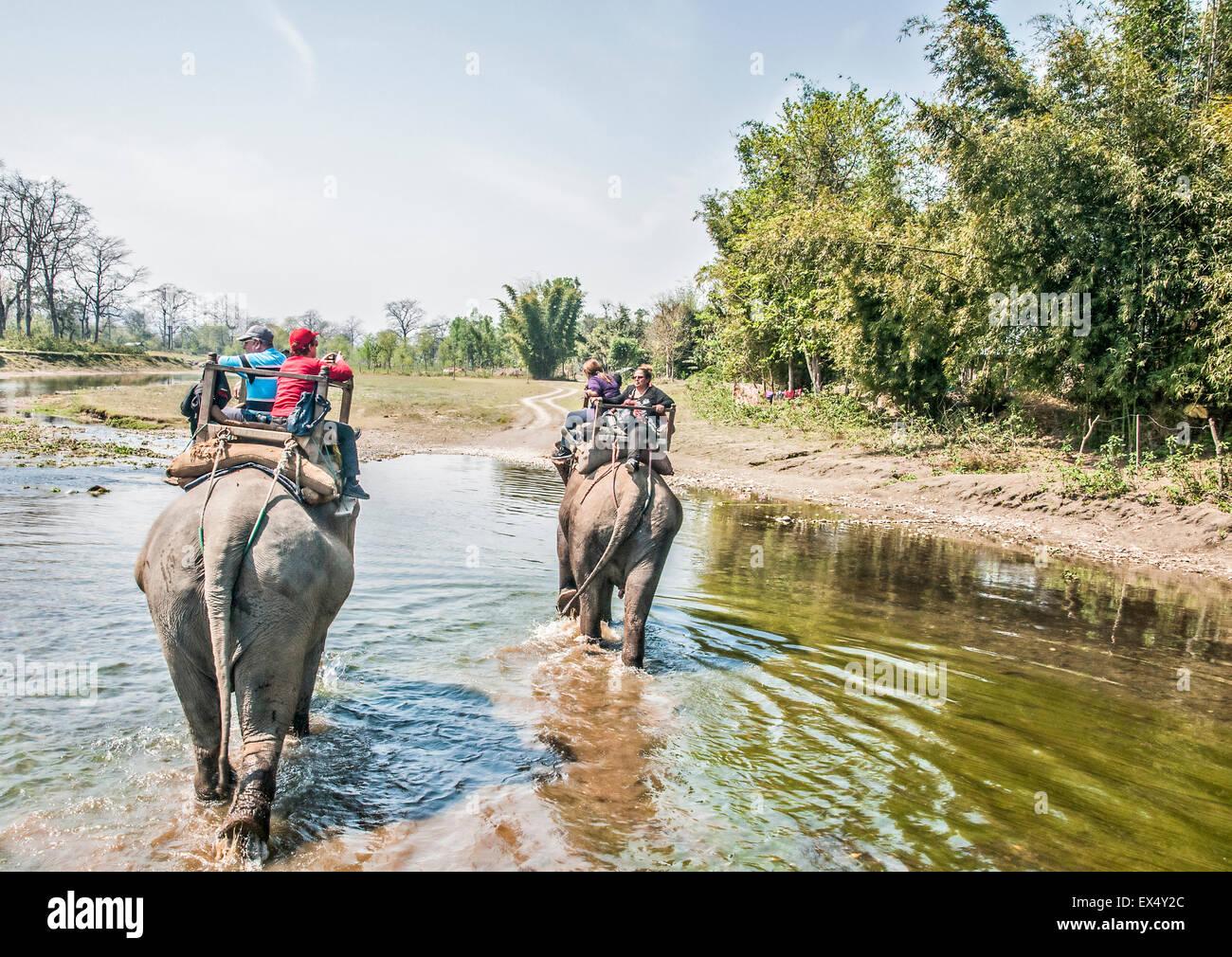 Elephant safari, Chitwan National Park, Nepal - Stock Image