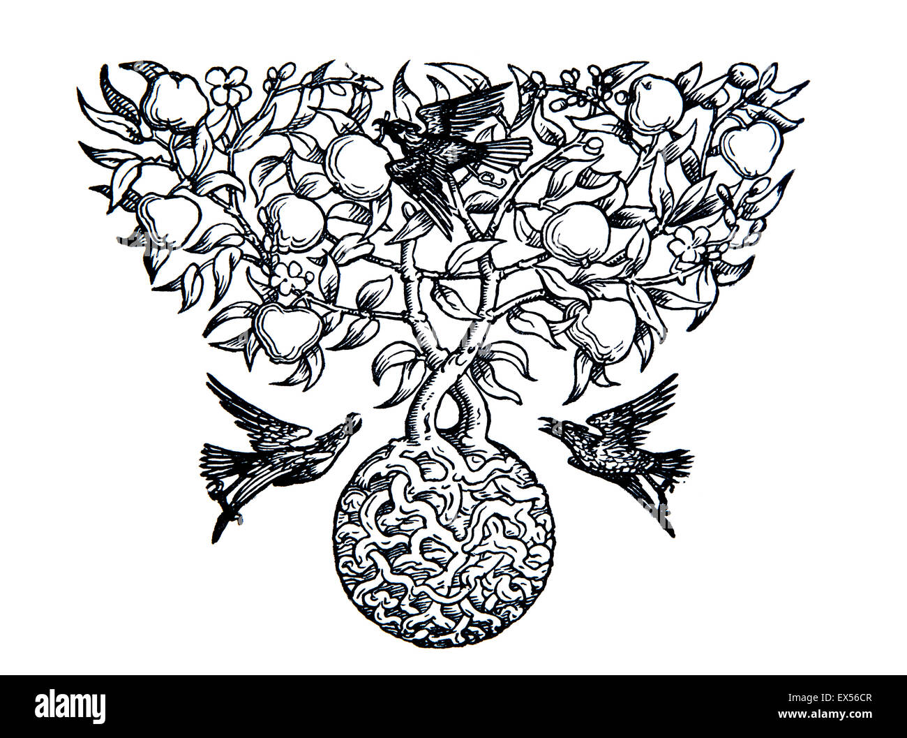 birds taking fruit from tree of life, belle epoque line illustration endpiece - Stock Image