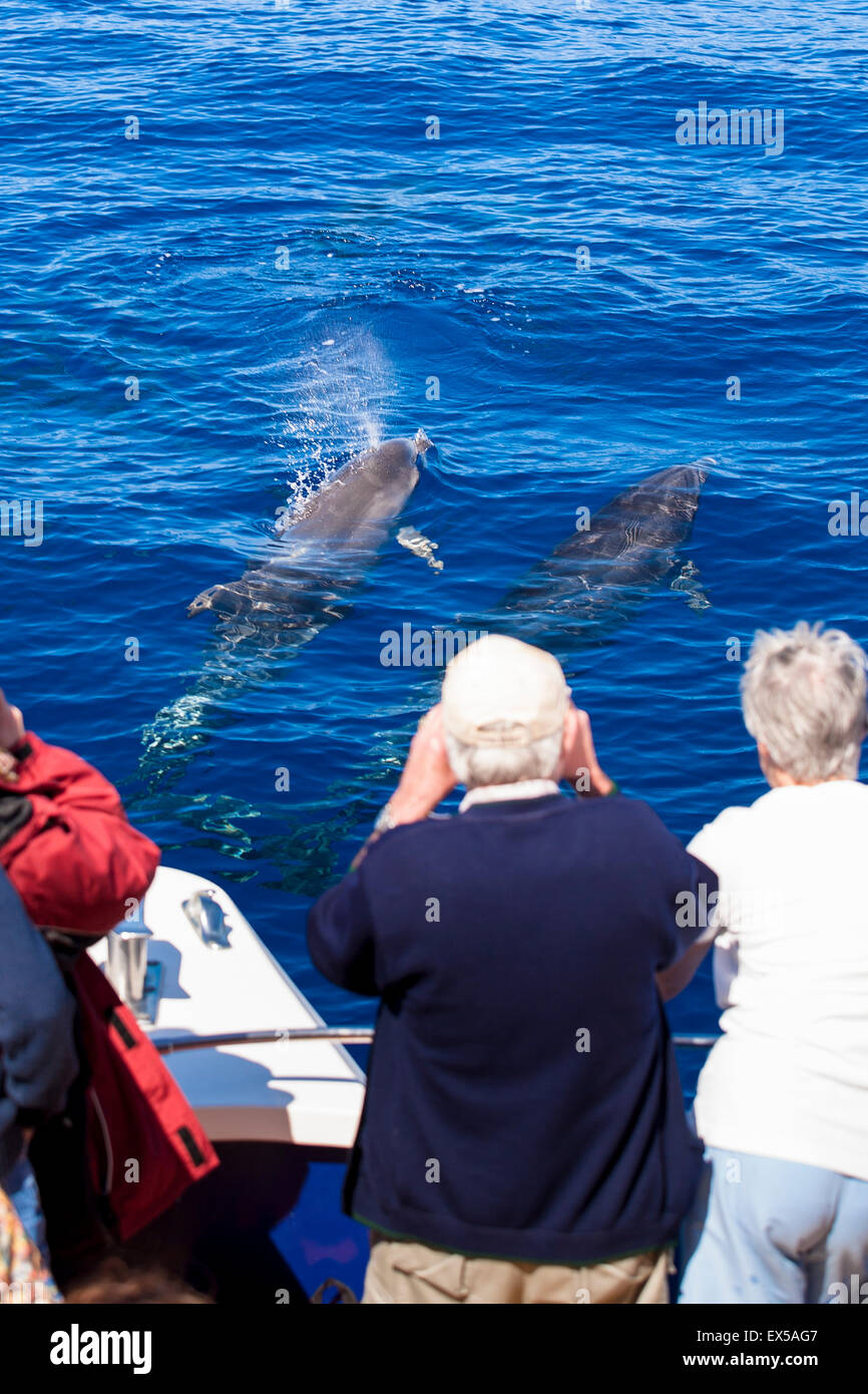 ESP, Spain, the Canary Islands, island of La Palma, boat-trip at the west coast, tourists watching bottlenose dolphins. - Stock Image