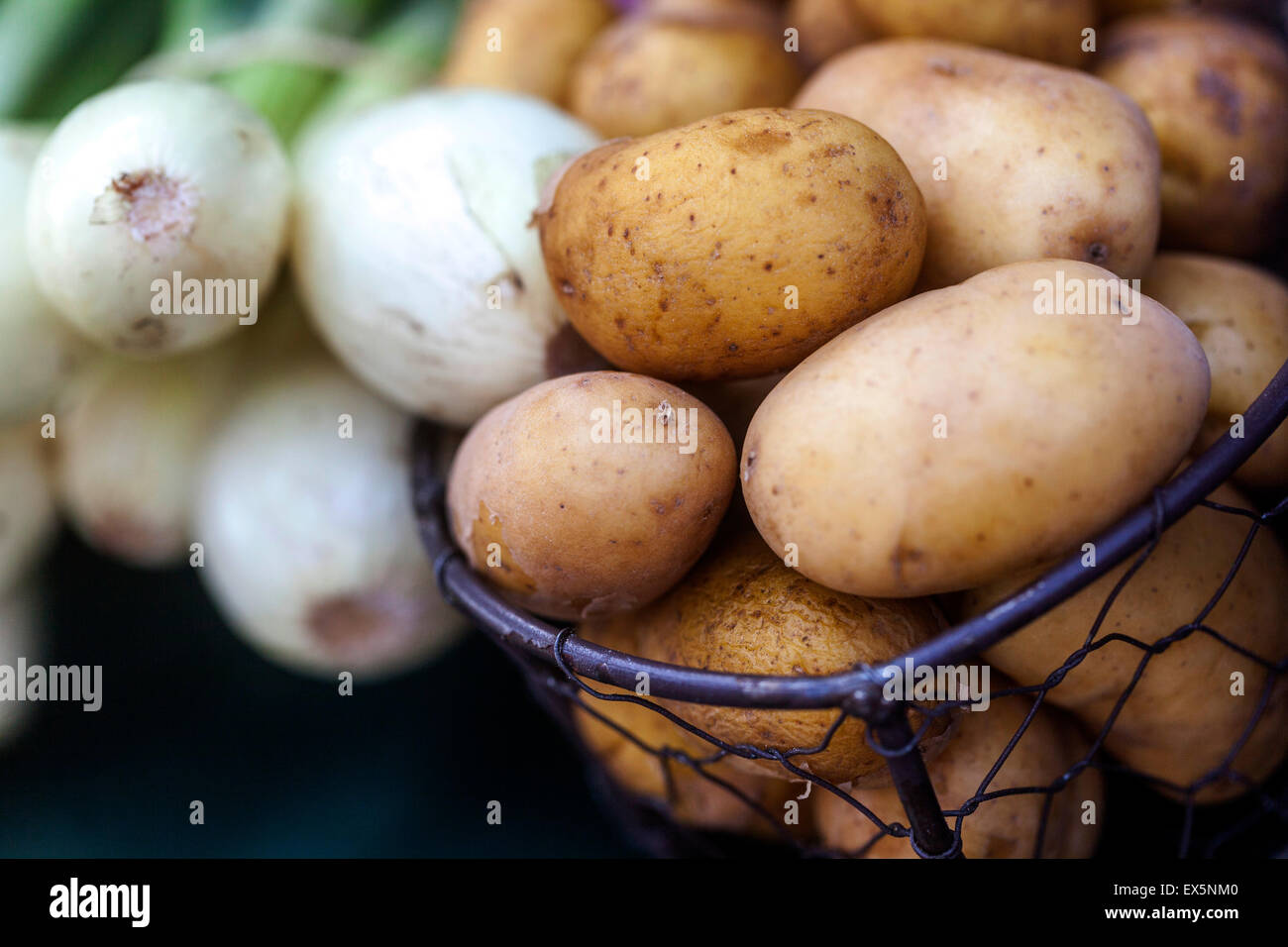 Potatoes in a wire basket and onions - Stock Image