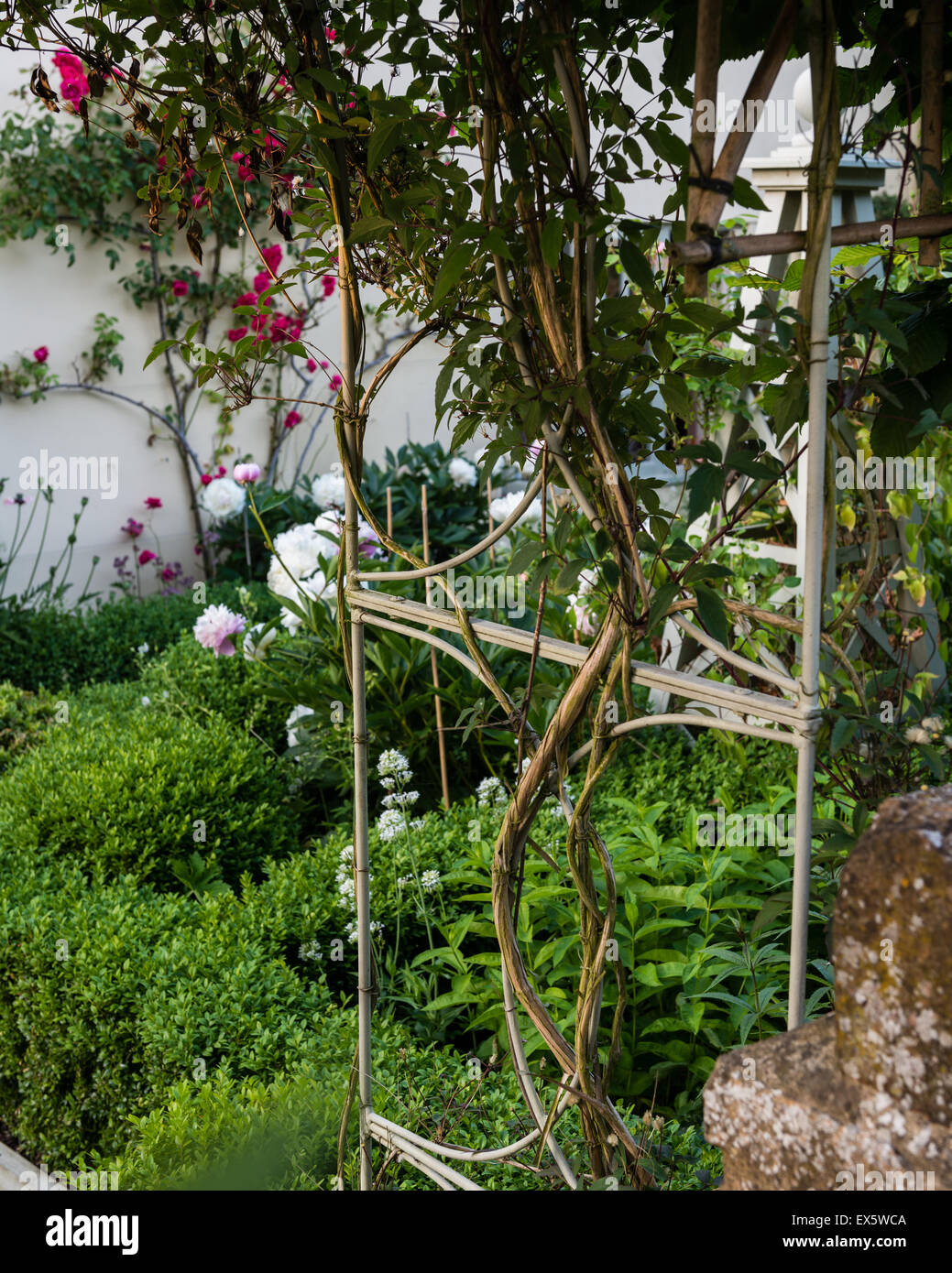 Box hedge and trellis in country garden - Stock Image