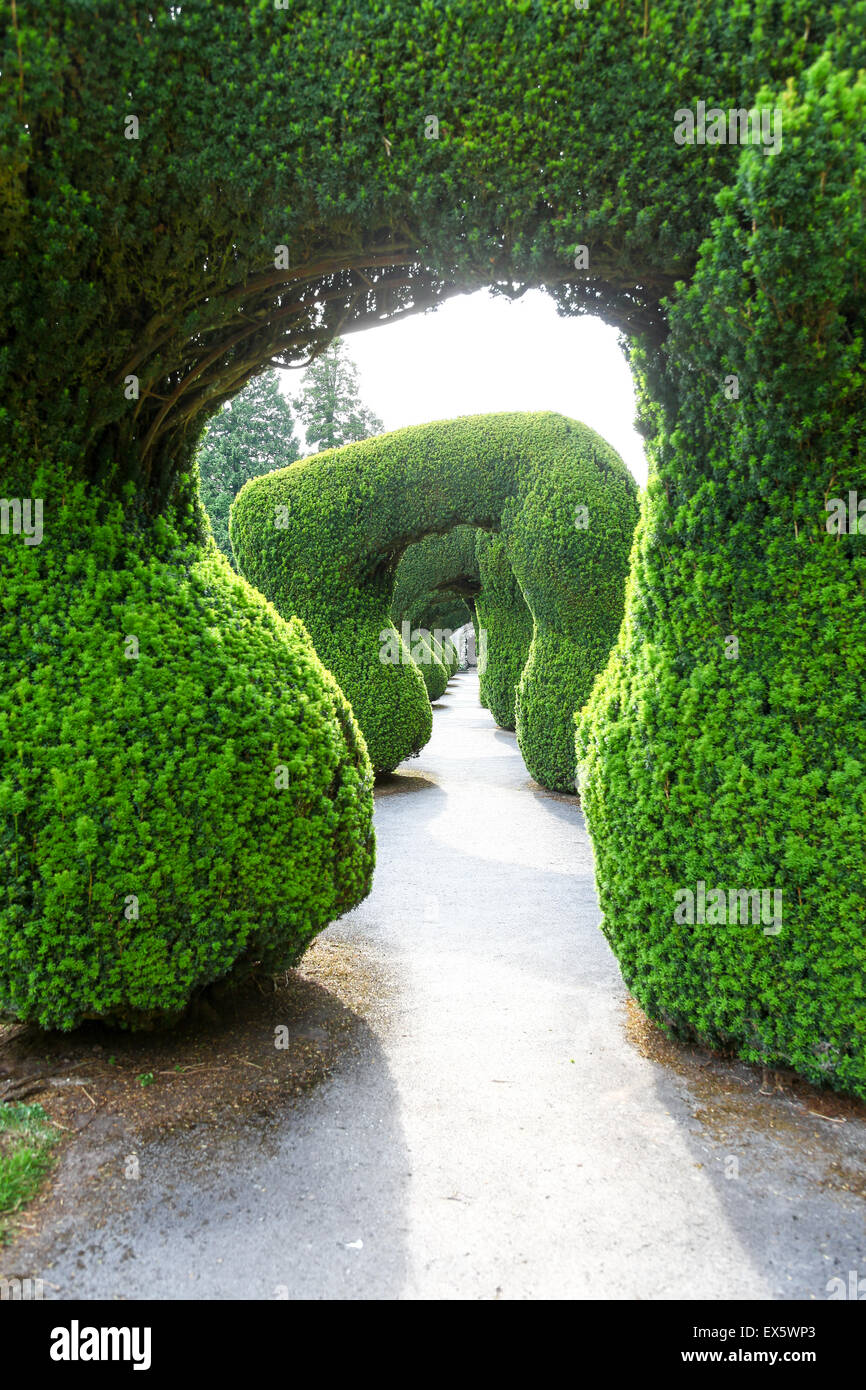 The Yew walk hedge arches at Alton Towers Estate Theme Park Gardens Staffordshire England UK - Stock Image