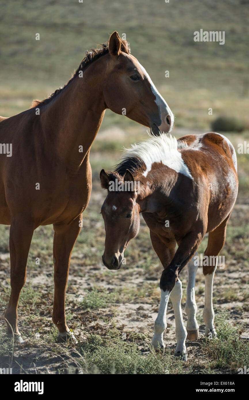 Mother Horse With Colt Stock Photos Amp Mother Horse With