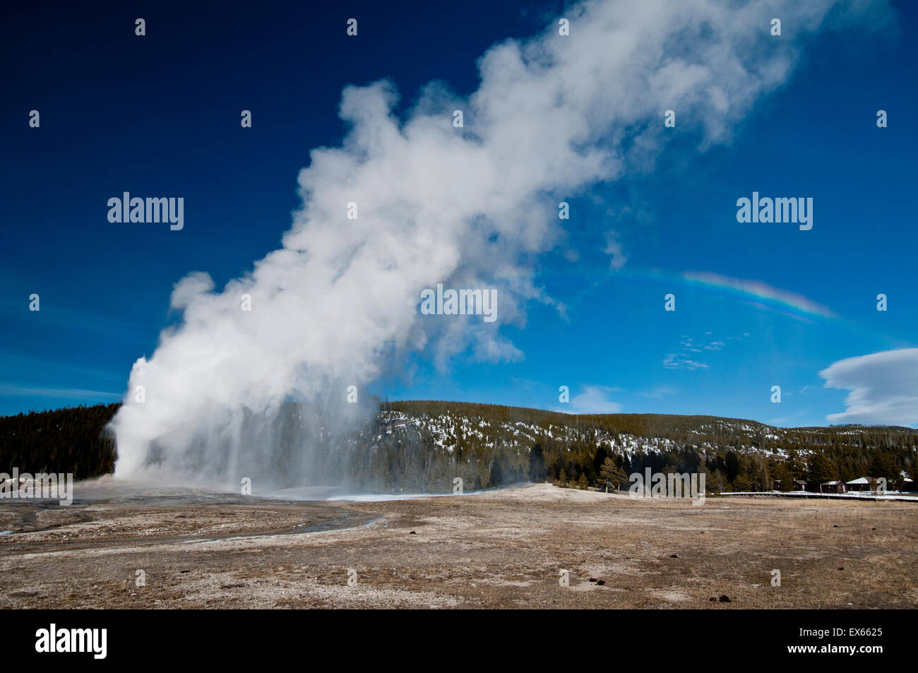 Old Faithful Geyser erupting in Yellowstone National Park, WY Stock Photo