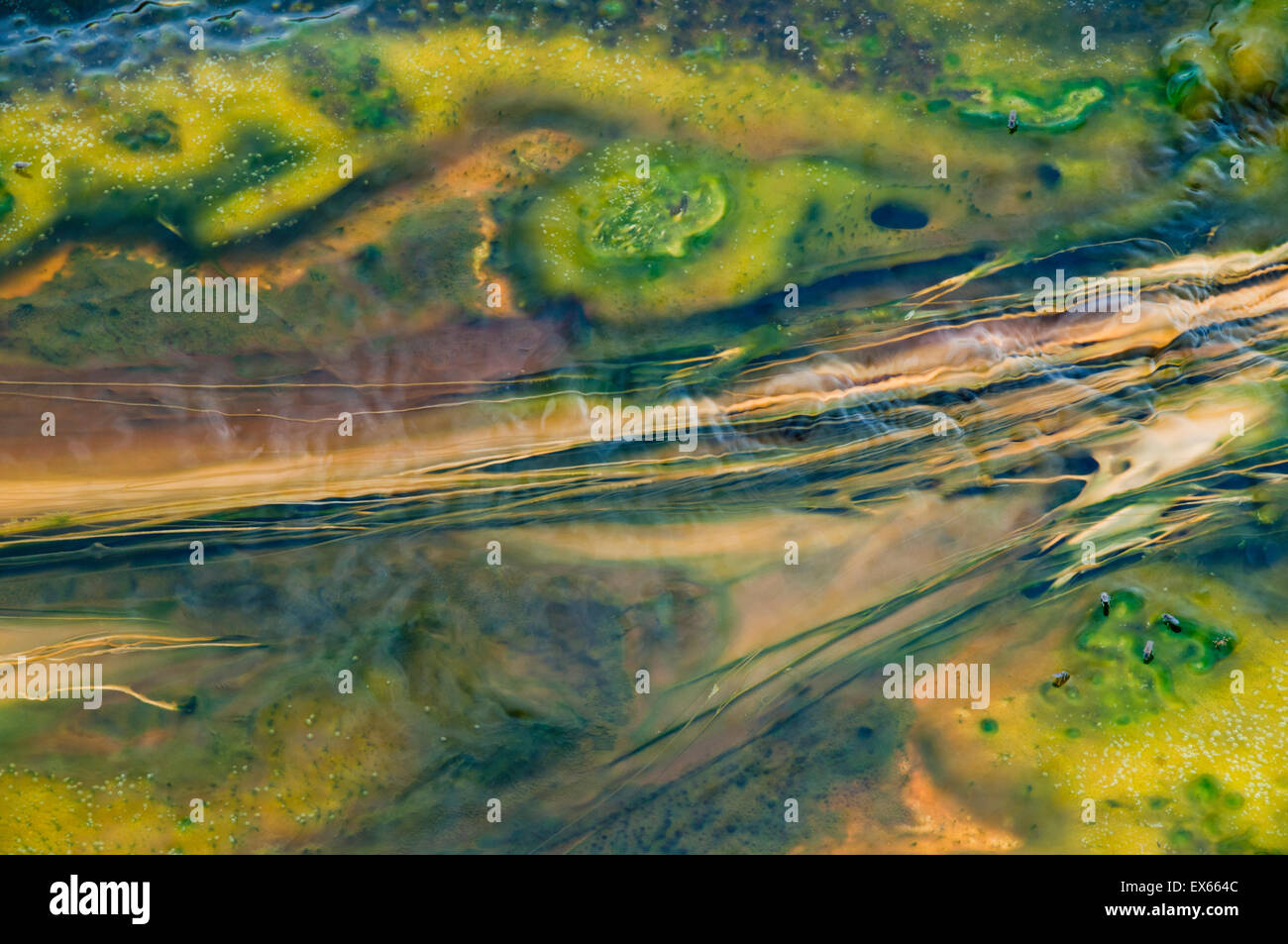 Algae and thermophilic microorganisms in hot springs in the Upper Geyser Basin in Yellowstone National Park WY - Stock Image