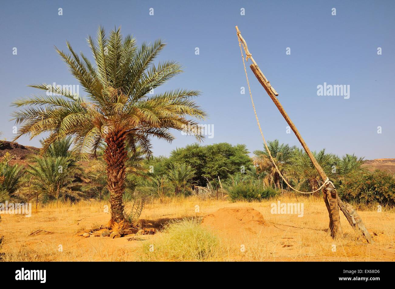 Simple drawing well with date palms, Rachid oasis, Tagant region, Mauritania - Stock Image