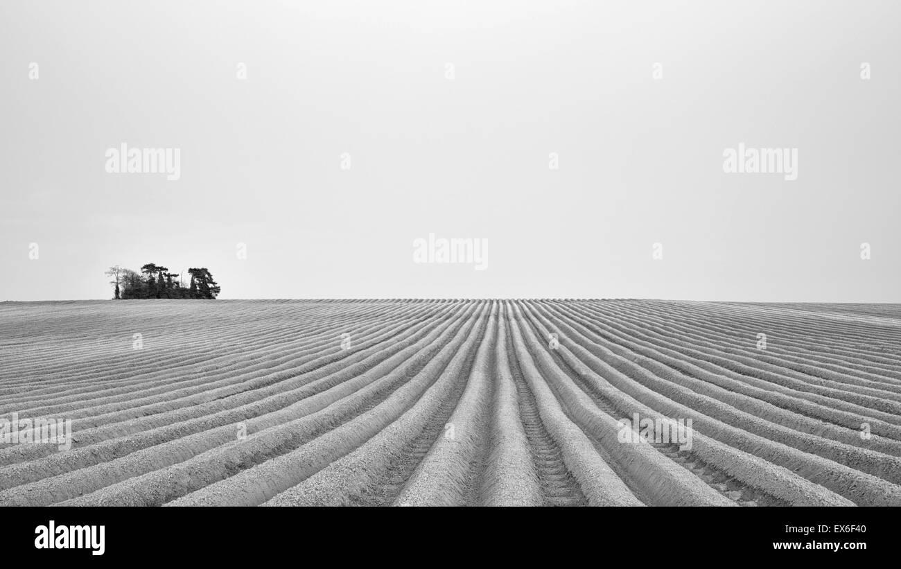 Ploughed fields Cambridge UK black & white - Stock Image