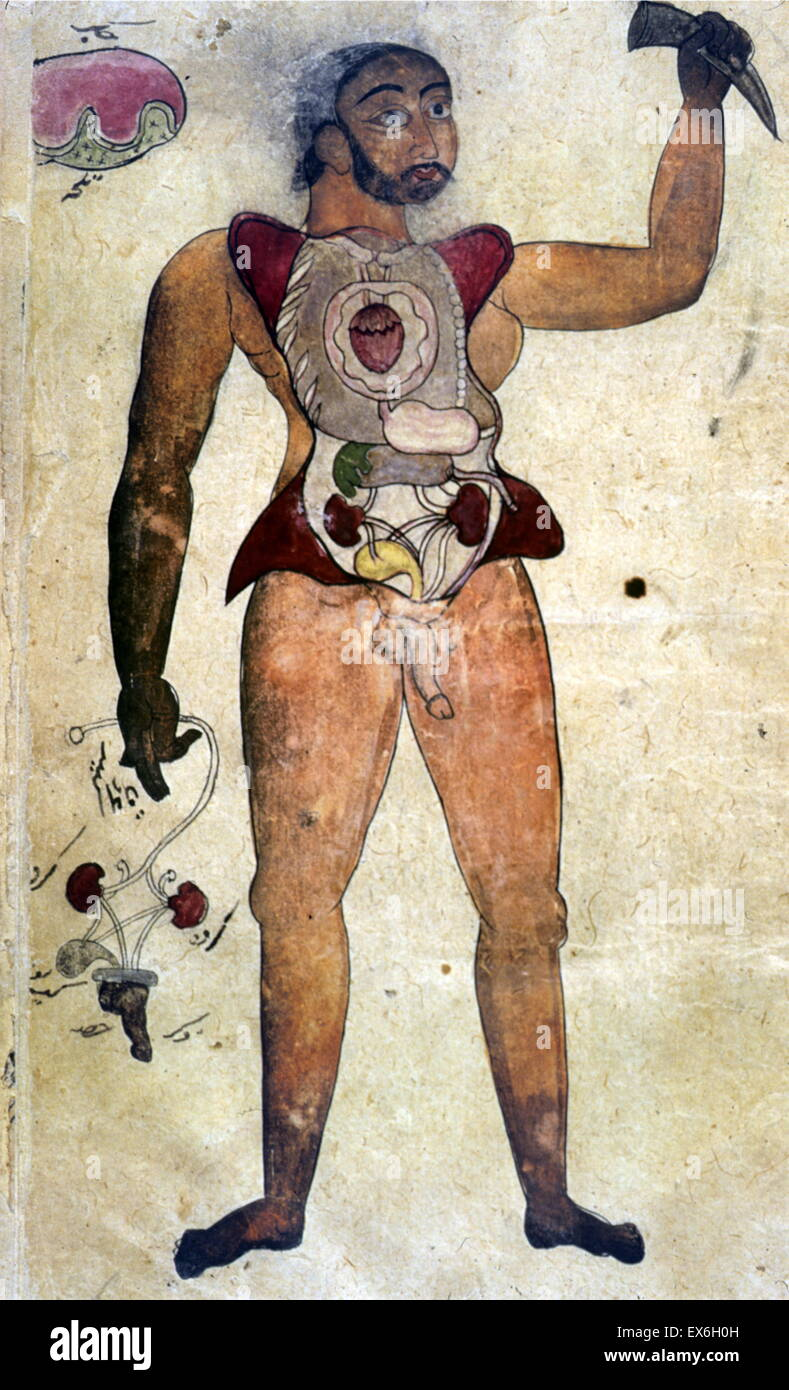 Illustrations, in ink and opaque watercolours, of a male figure with his abdomen and chest opened to reveal the - Stock Image