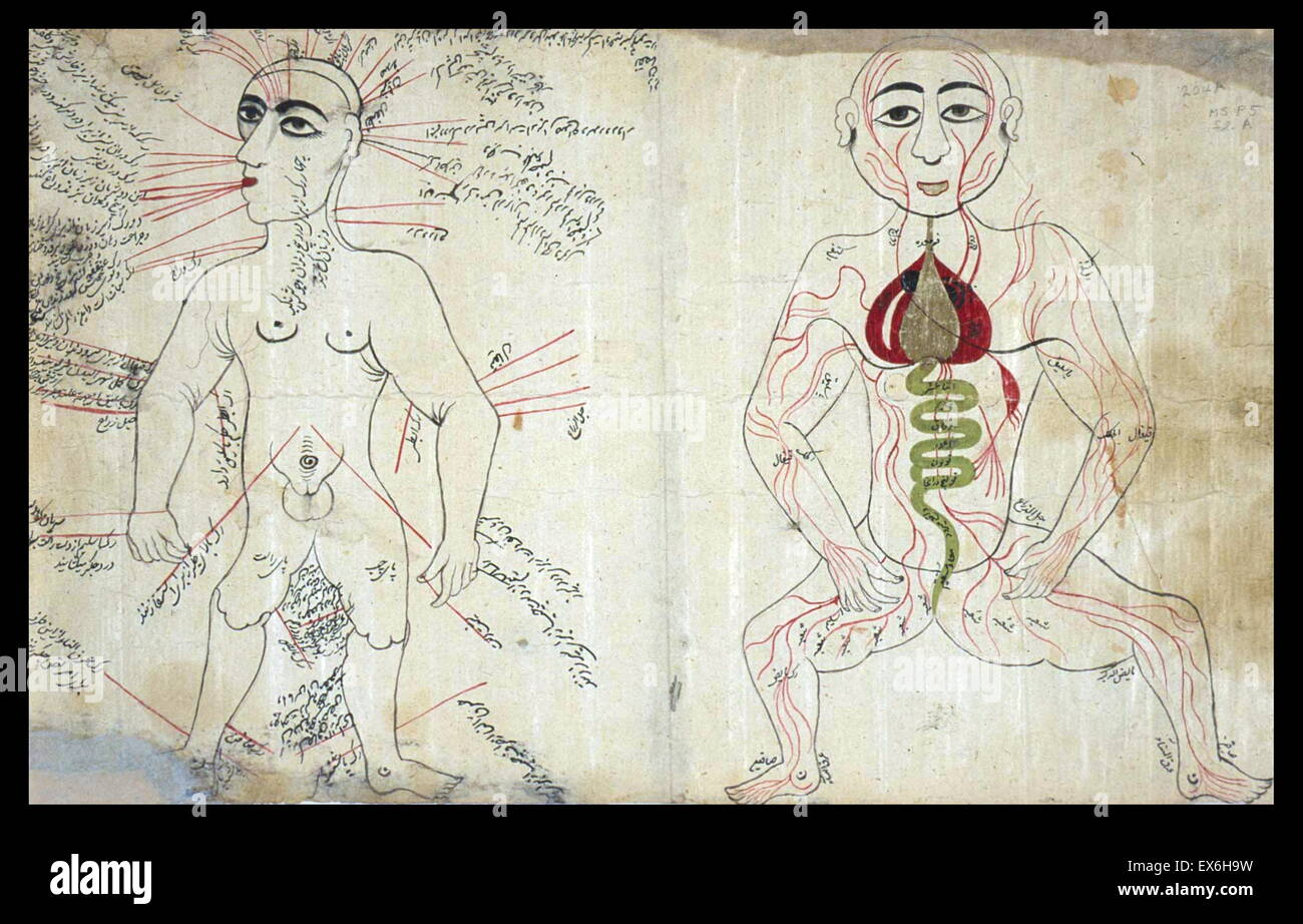 anonymous and undated manuscript as, Two Anatomical Drawings: a bloodletting figure and a venous figure (MS P 5, - Stock Image