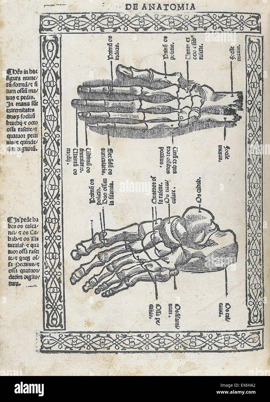 Anatomical illustration from 'Isagogae breues, perlucidae ac uberrimae, in anatomiam humani corporis a communi medicorum Stock Photo