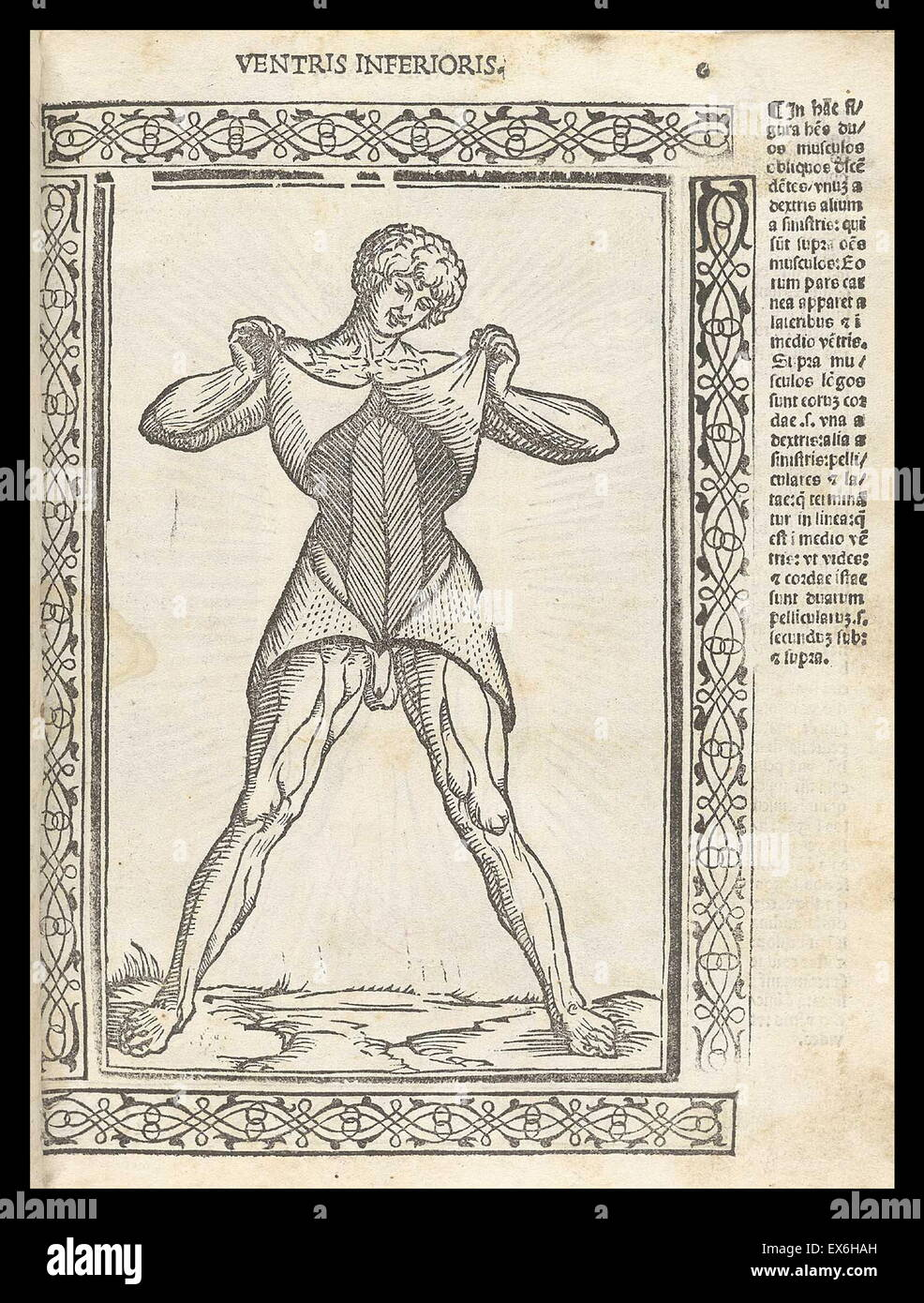 Anatomical illustration from 'Isagogae breues, perlucidae ac uberrimae, in anatomiam humani corporis a communi - Stock Image