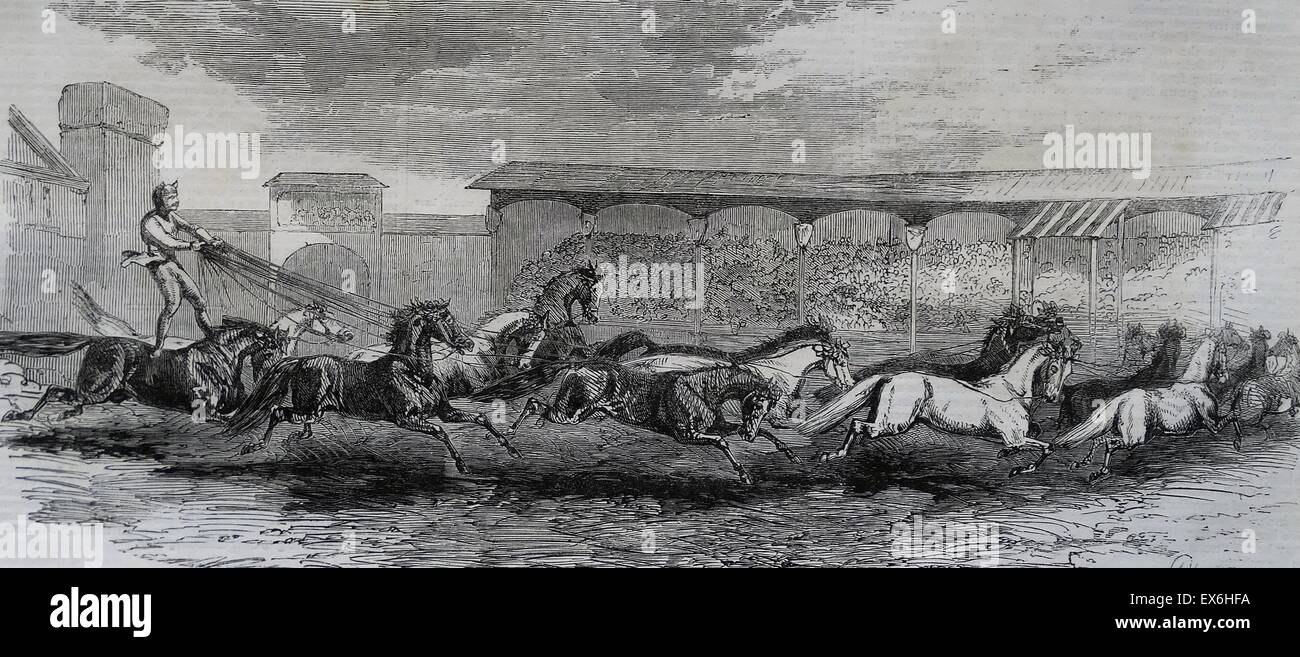 Engraving depicting the Paris Hippodrome. Seventeen horses are being driven. Dated 1860 - Stock Image