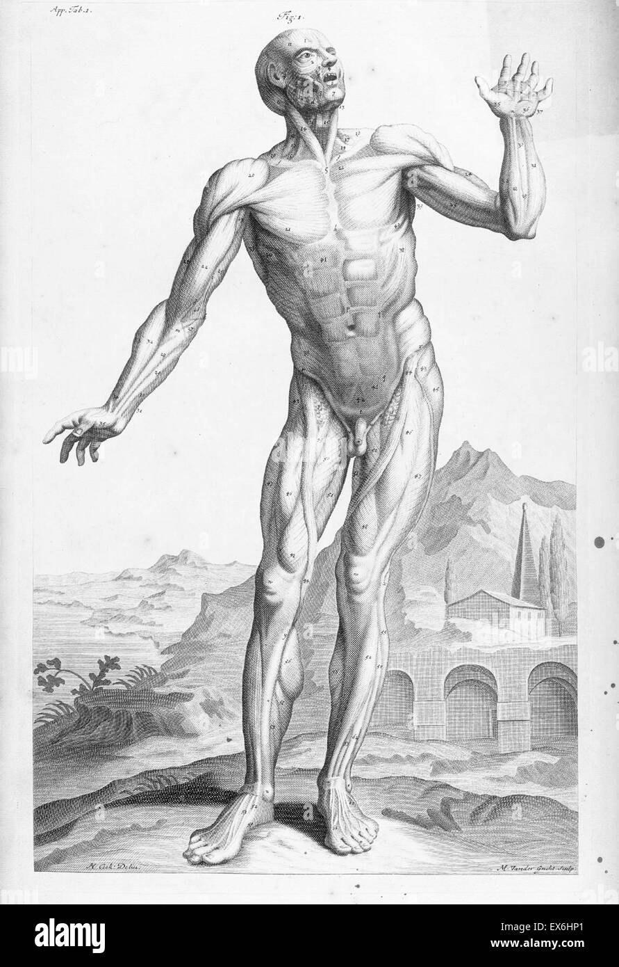 17th Century Anatomy Stock Photos & 17th Century Anatomy Stock ...
