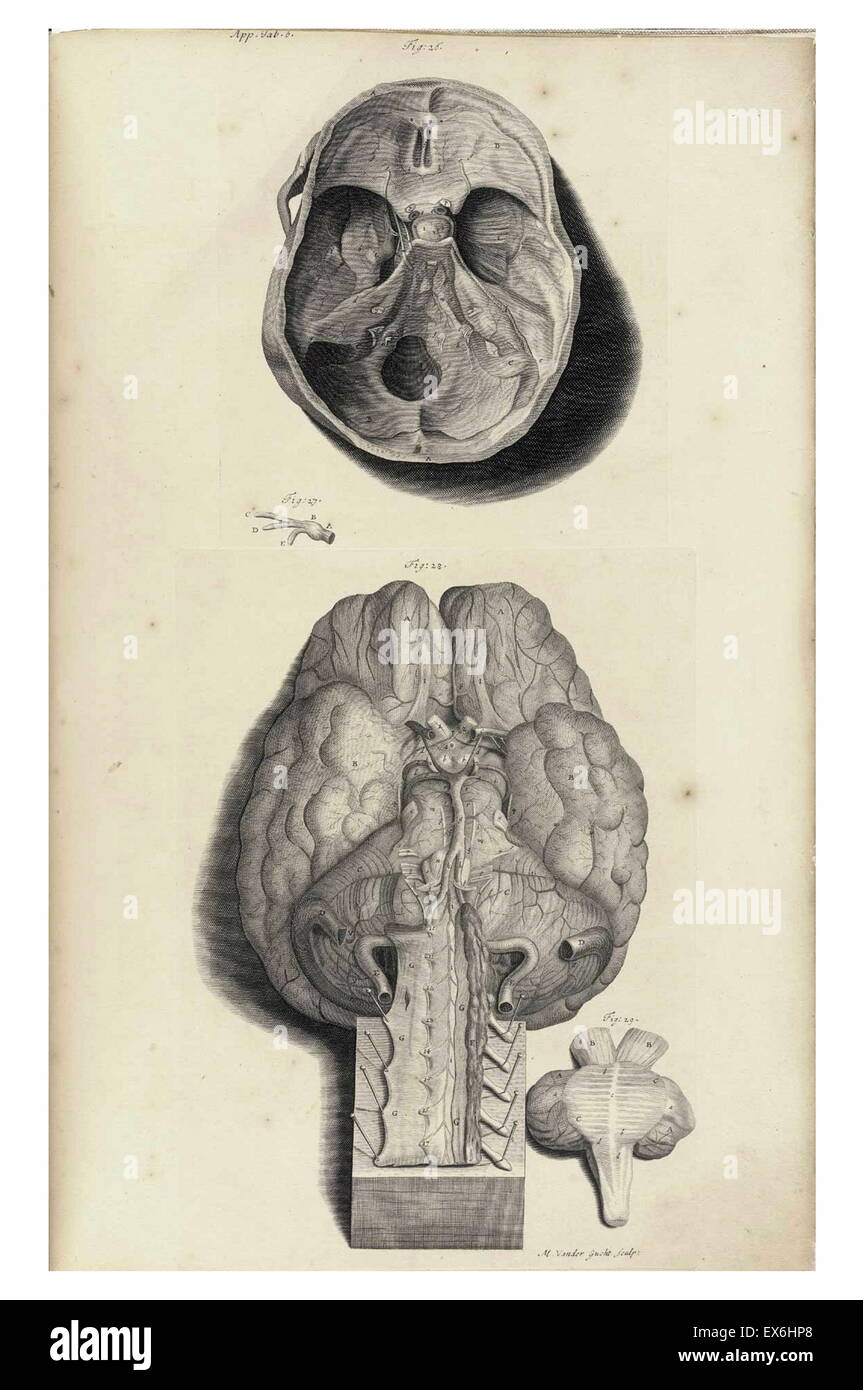 illustration from 'The anatomy of humane bodies' by William Cowper, (Oxford, 1698) - Stock Image
