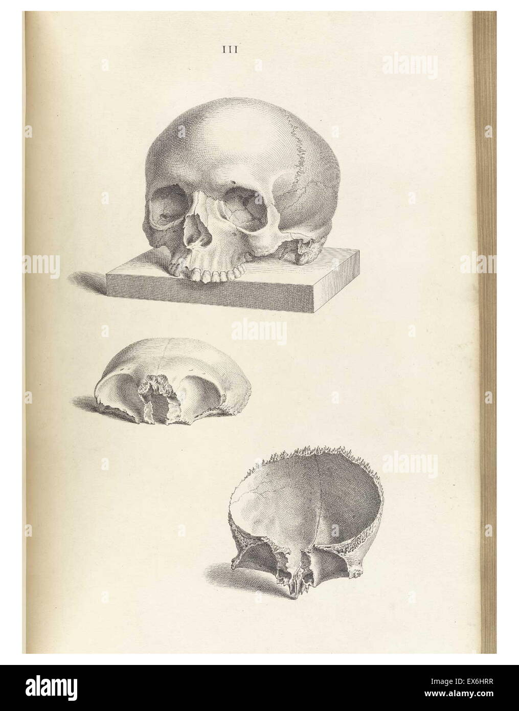 Anatomical drawing by William Cheselden in Osteographia, or The ...