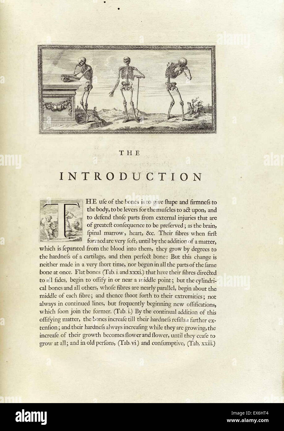 Anatomical drawings by William Cheselden in Osteographia, or The anatomy of the bones. (London: 1733). - Stock Image