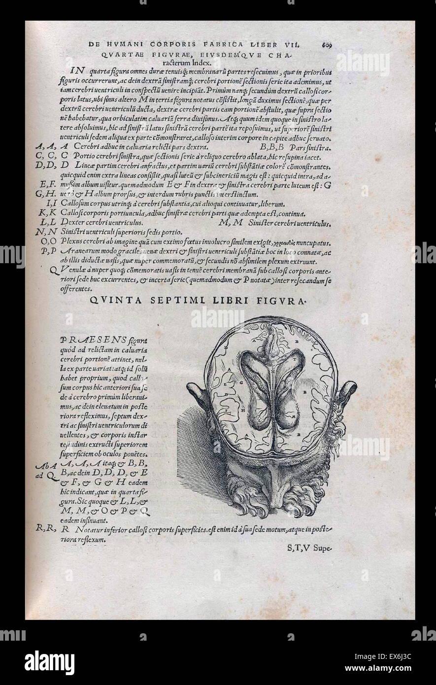 de humani corporis fabrica libri septem pdf