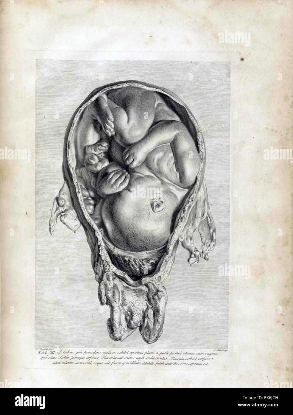 anatomical illustrations from \'Anatomia uteri humani gravidi tabulis ...