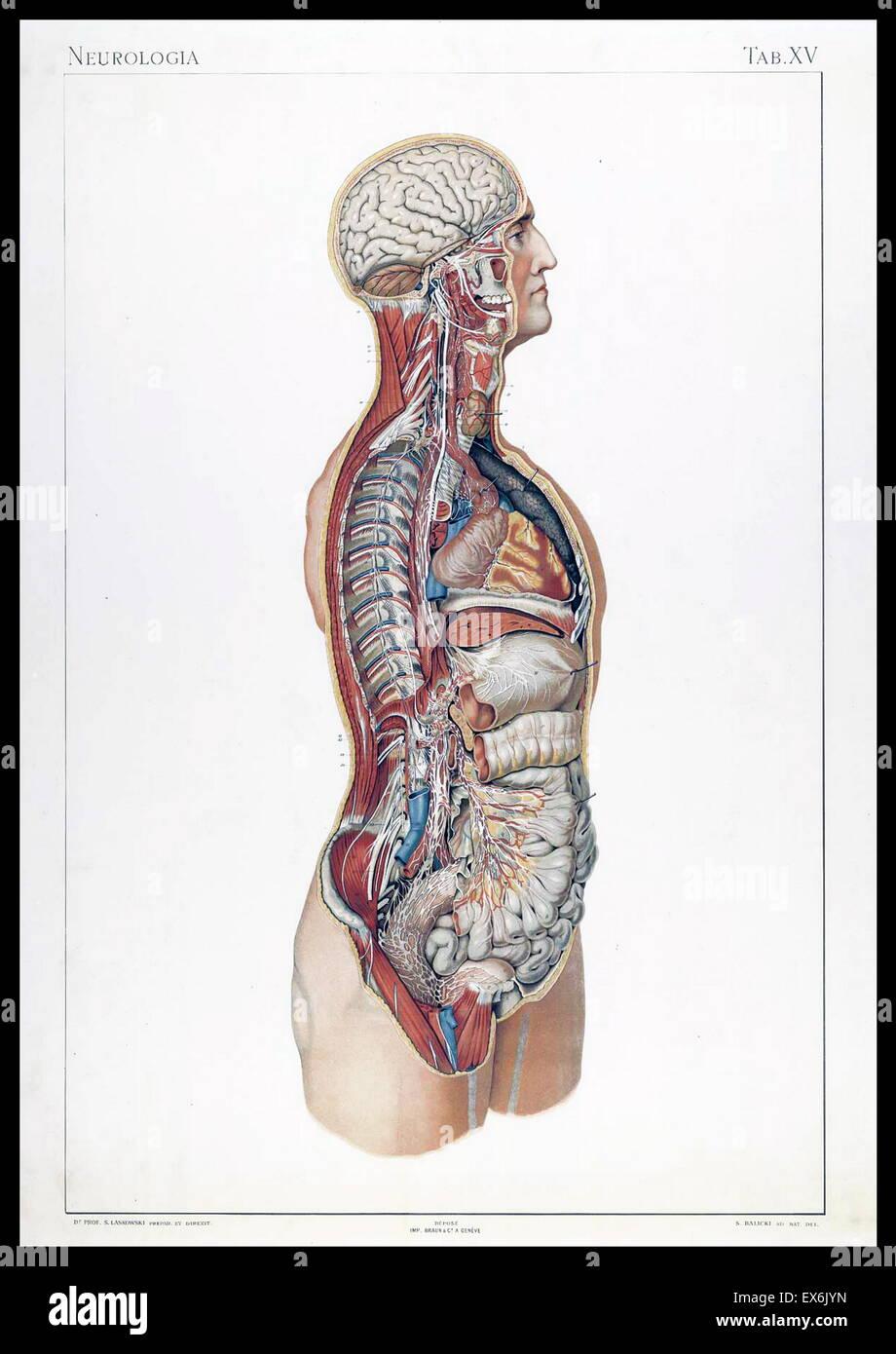 Beste Palm Anatomie Bilder Zeitgenössisch - Menschliche Anatomie ...
