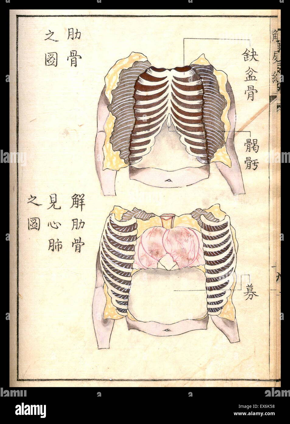 Illustration from a Japanese anatomical and medical text \'Complete ...