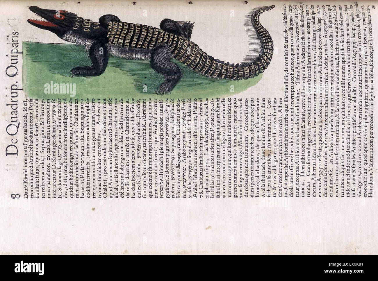 crocodile Illustration from \'medici Tigurini Historiae animalium ...
