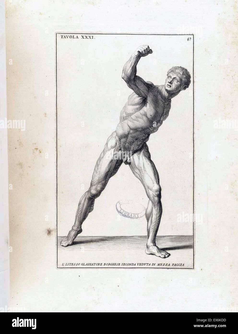 anatomical study by Bernardino Genga 'Anatomia per uso et intelligenza del disegno ricercata non solo su gl'ossi, Stock Photo