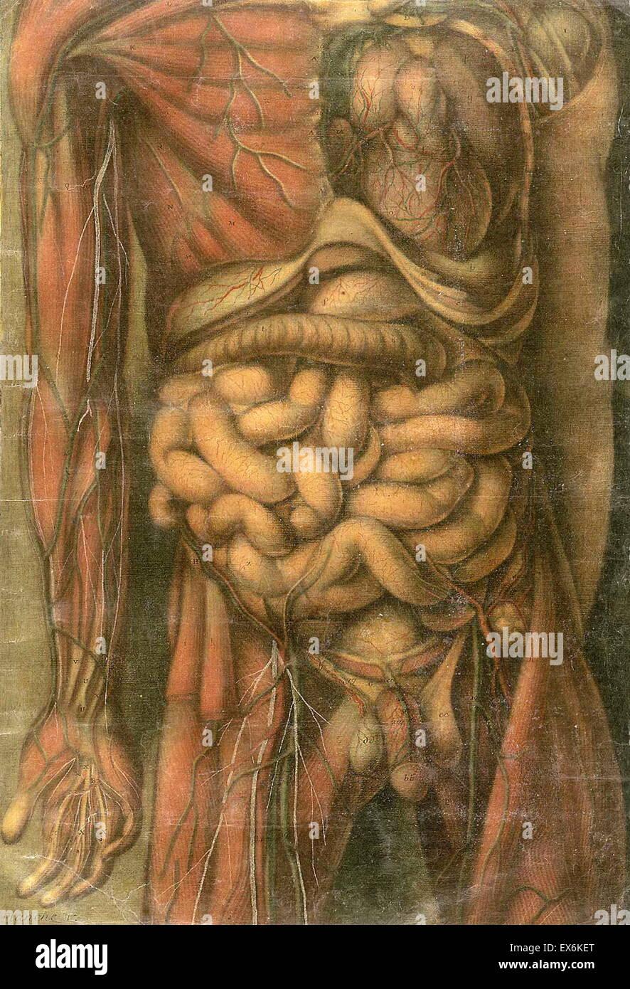 Charmant Anatomie Und Physiologie Lehrplan College Fotos ...