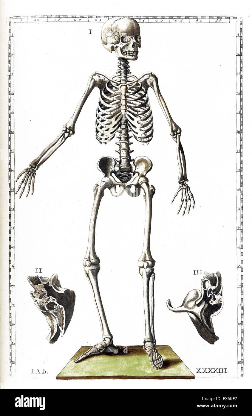 Illustration From Tabulae Anatomicae Rome 1783 By Bartolomeo