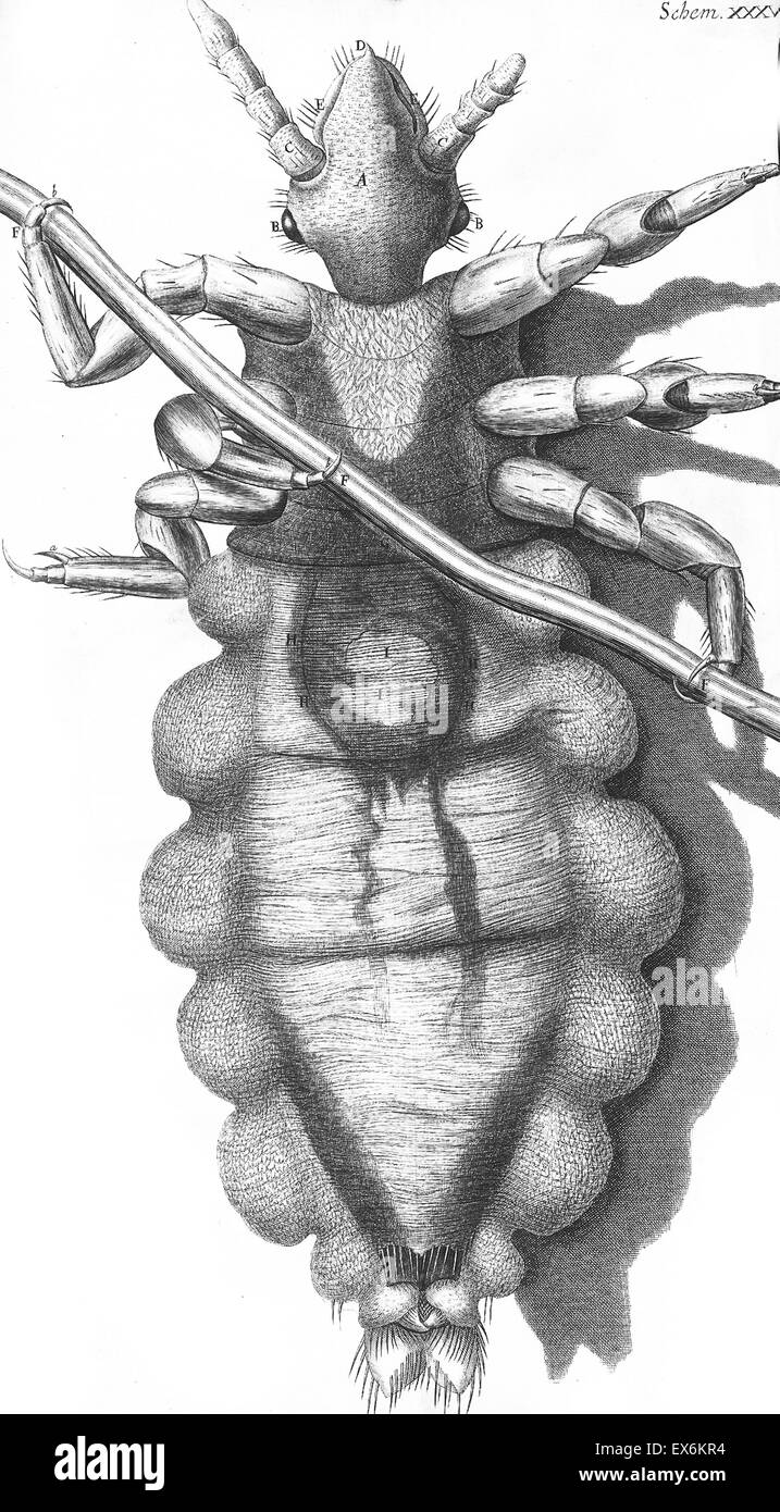 Illustration from 'Micrographia' 1665; by Robert Hooke, 1635-1703. Hooke's observations through various - Stock Image