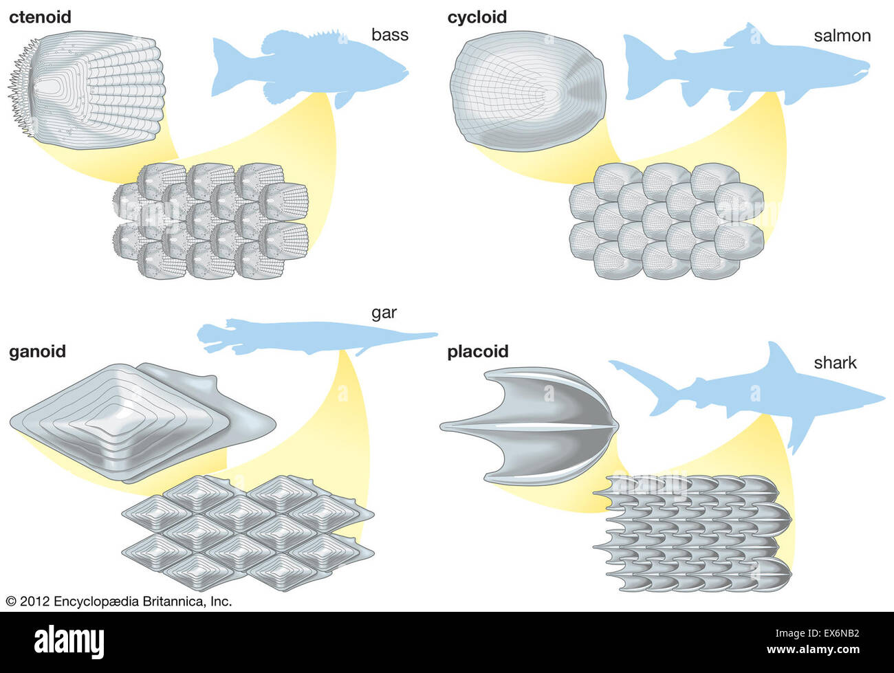 Types of fish scales Stock Photo