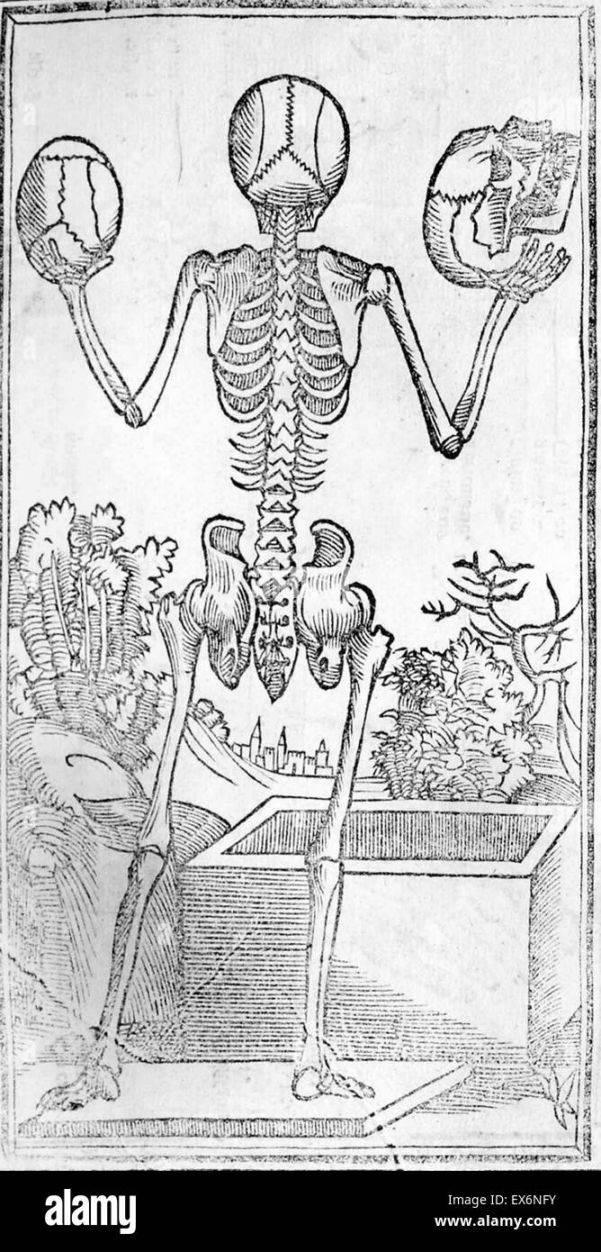 anatomical illustration by Jacopo Berengario da Carpi (ca.1460-ca.1530) 'Isagogae breves per lucidae ac uberrimae Stock Photo