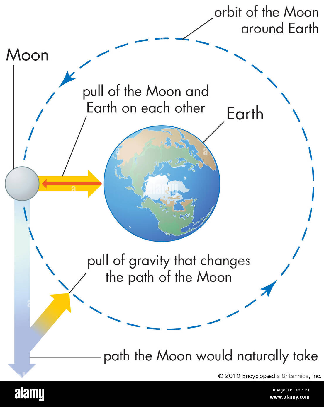 Effects of gravity on the Moon and Earth - Stock Image