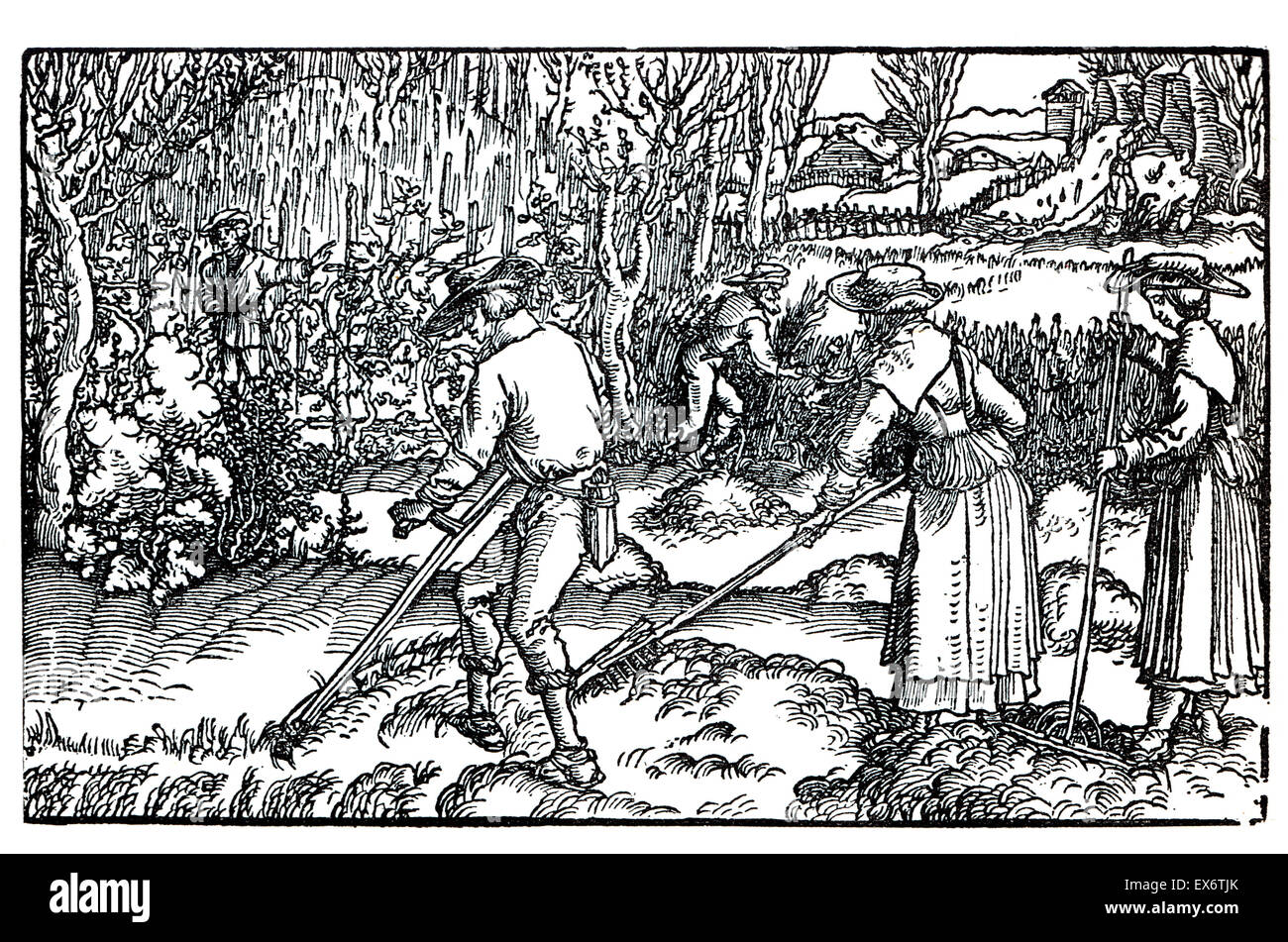 16th century farming, 1582 woodcut illustration by Hans Burgmair (Burgkmair)