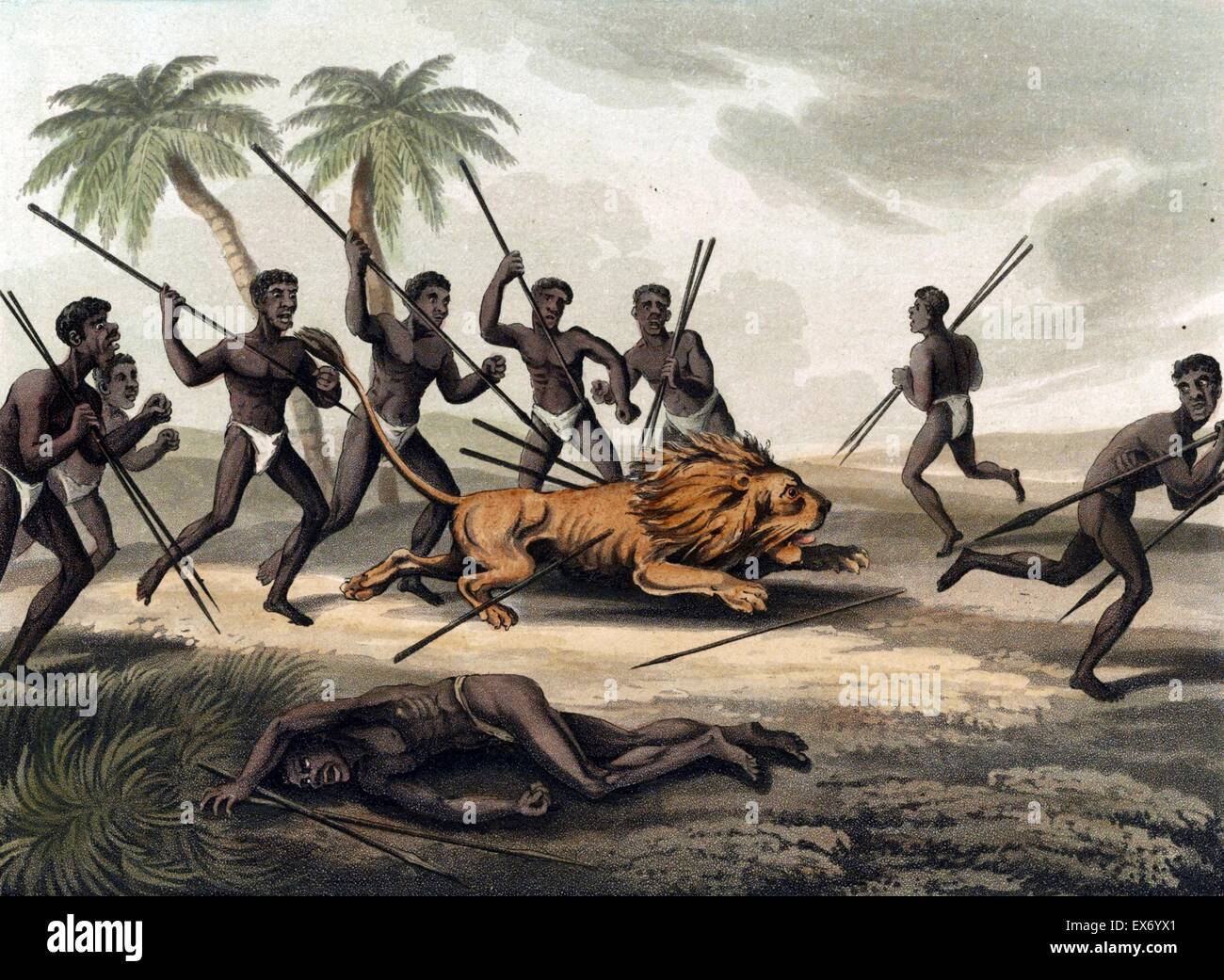 Caffres hunting a lion' Africans with spears surrounding a lion; an injured man lies in the foreground. By Samuel - Stock Image
