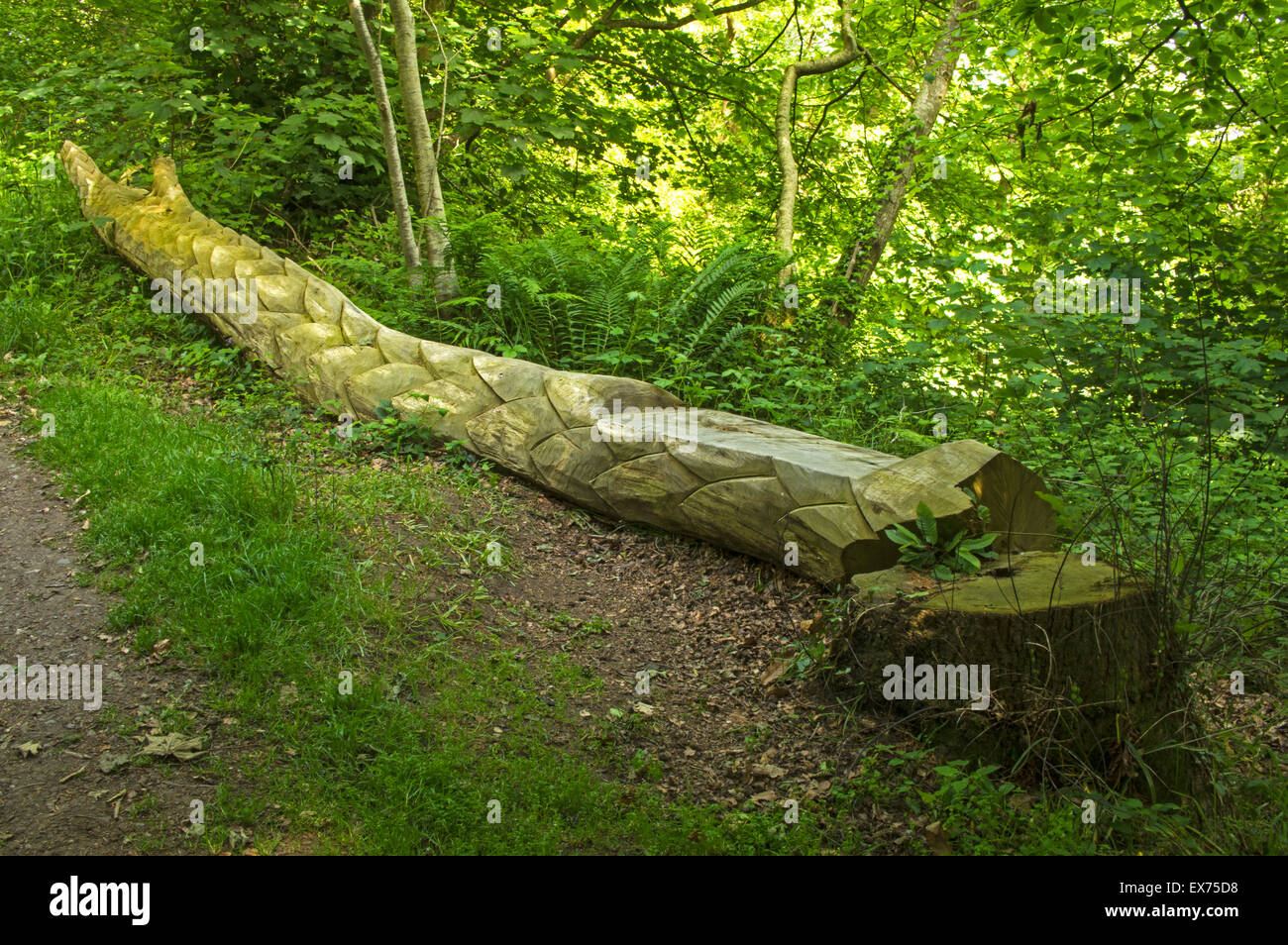 A fallen tree carved to look like a dragon with a seat as well at The Dingle, Local Nature Reserve, Llangefni, Anglesey, - Stock Image