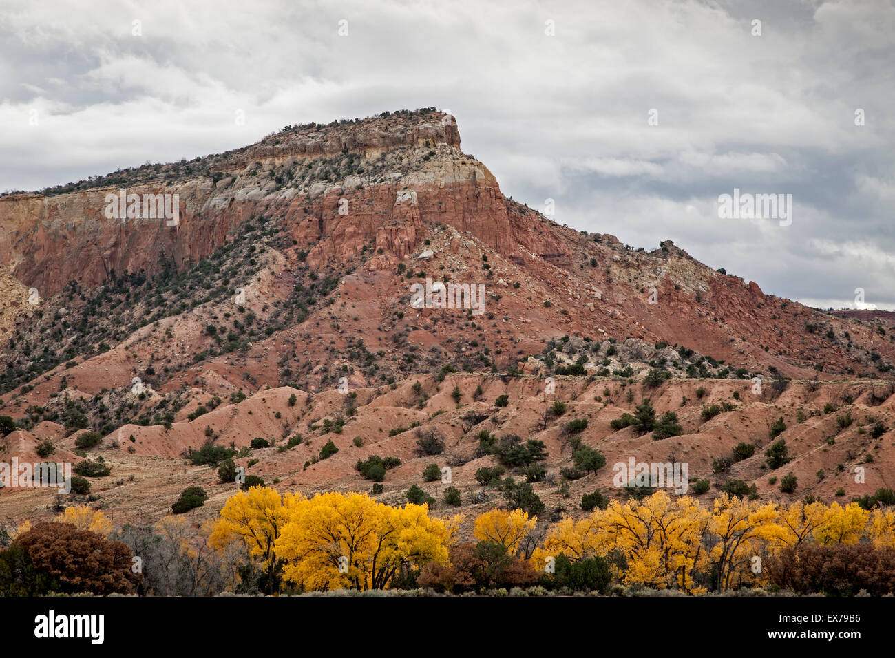 Red bluff and yellow cottonwoods in fall, Ghost Ranch, New Mexico USA - Stock Image