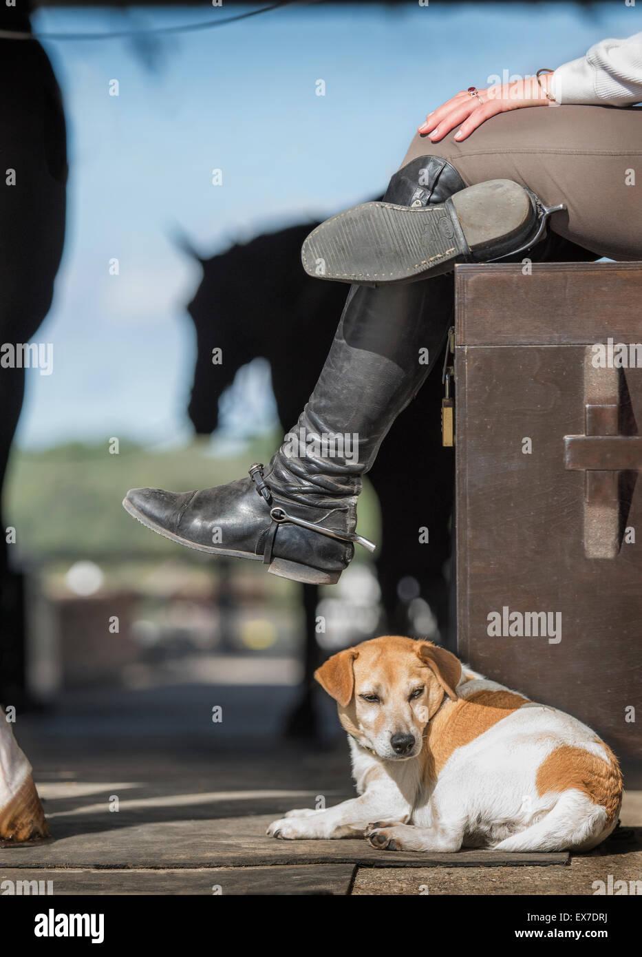 dog and horse barn activity - Stock Image