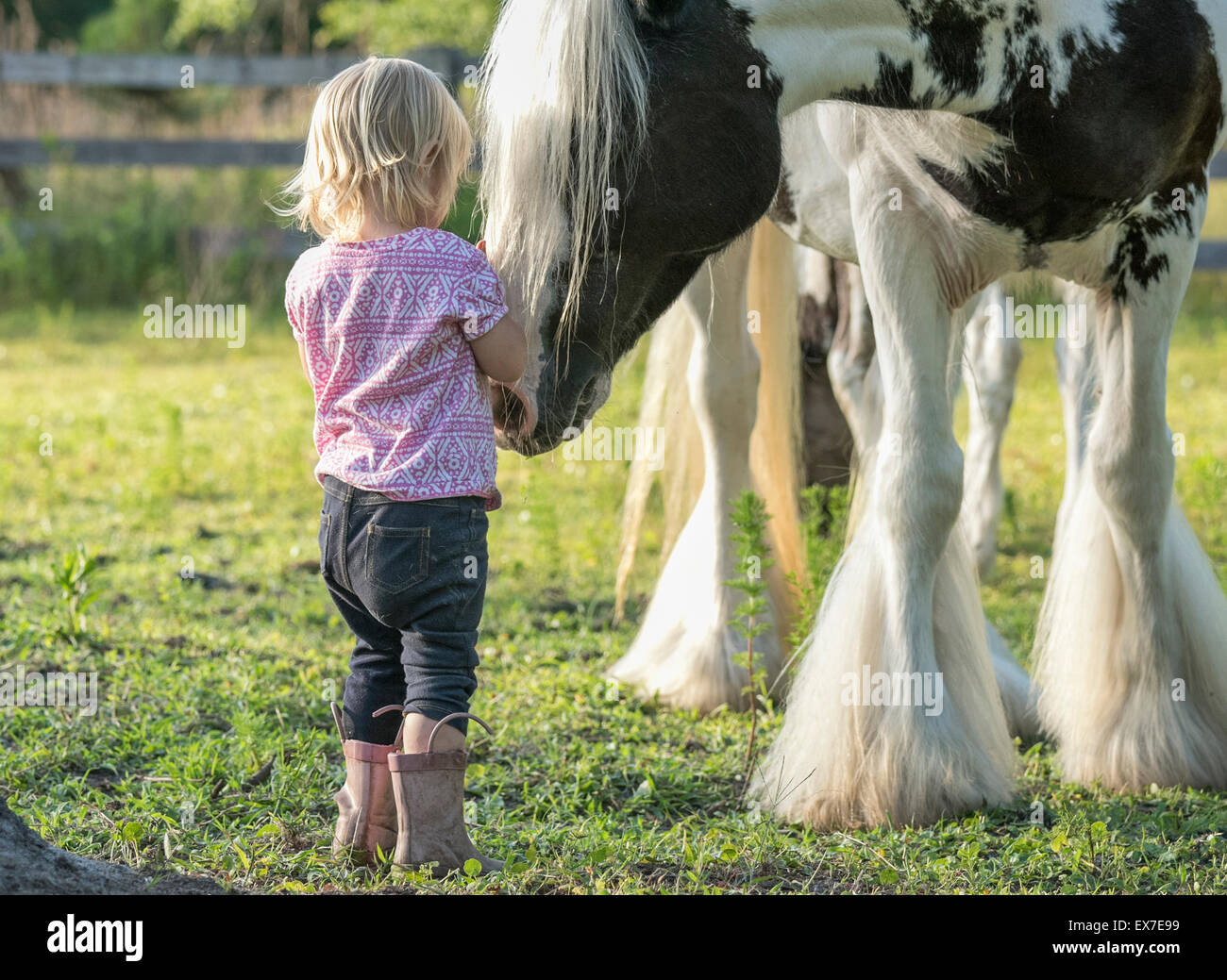 Toddler girl with Gypsy Vanner Horse mare in paddock - Stock Image
