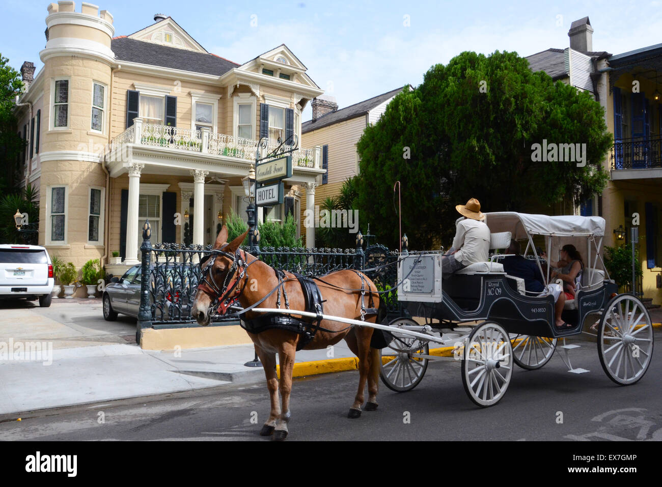 cornstalk hotel new orleans haunted elvis presley french quarter mule drawn carriage - Stock Image
