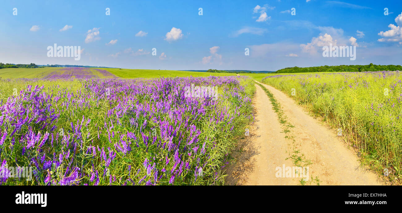 Country road across the field with strangle-tare in summer countryside. - Stock Image