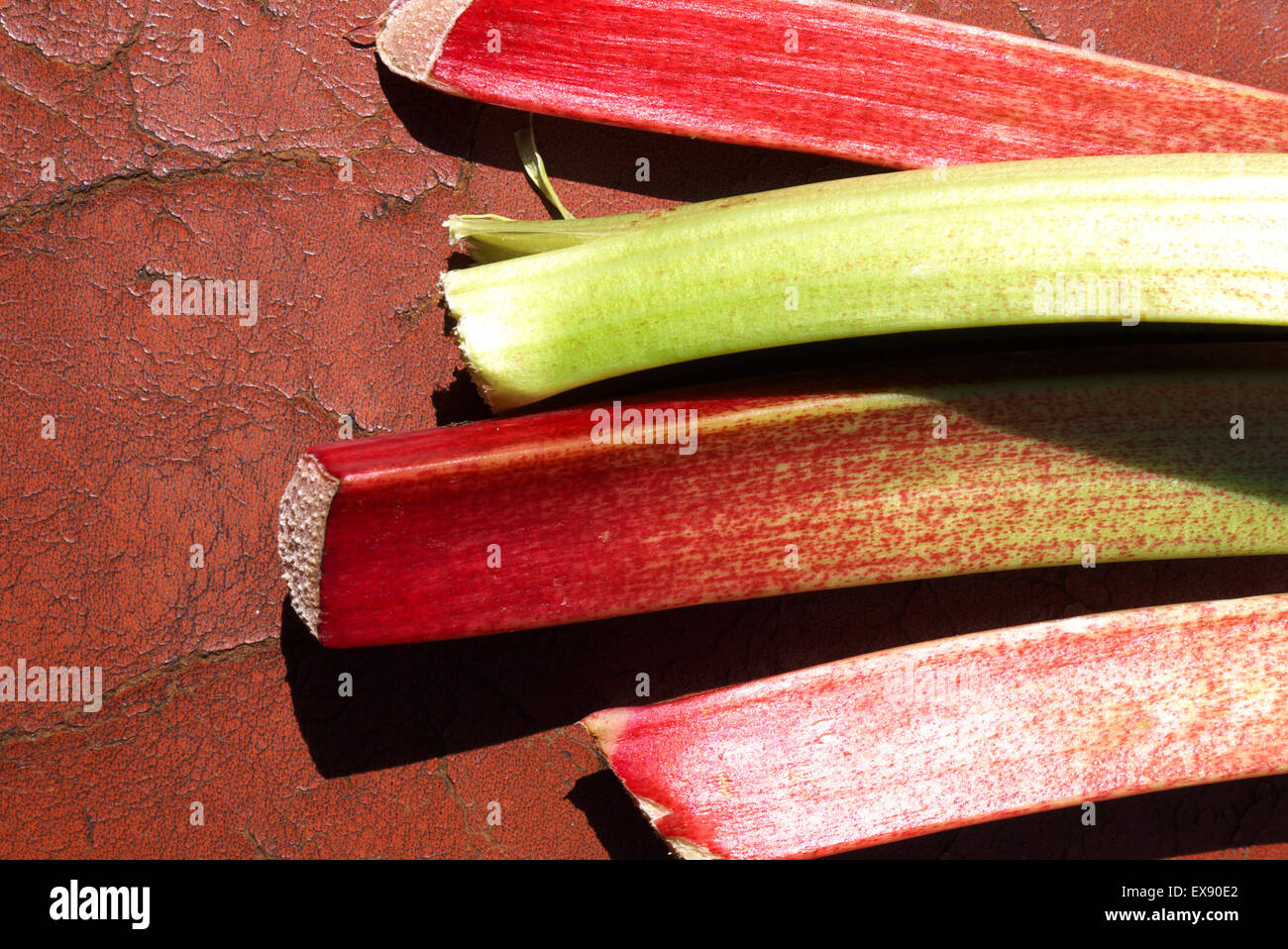 A stylized image of showing several cut lenghs rhubarb - Stock Image