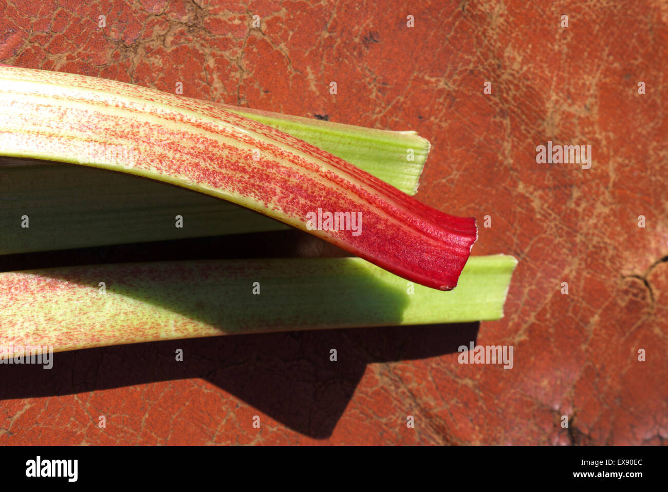 Four sprigs of rhubarb freshly picked. waiting to be cooked. - Stock Image