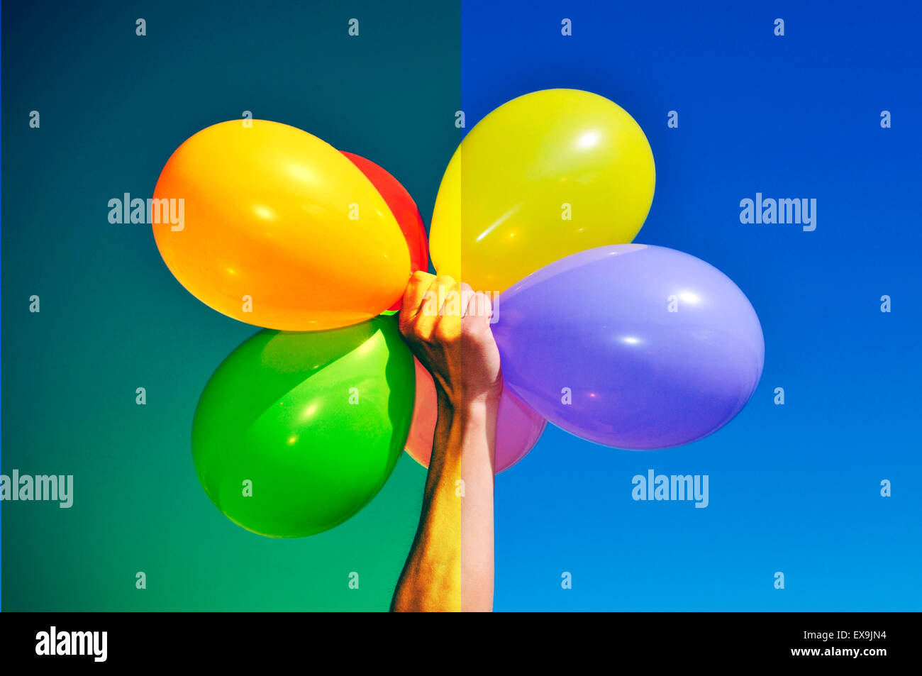 man holding a bunch of balloons of different colors before (right) and after (left) applying a filter during the - Stock Image