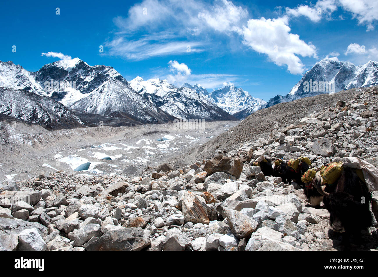 Yaks - Everest Base Camp Trail - Nepal - Stock Image