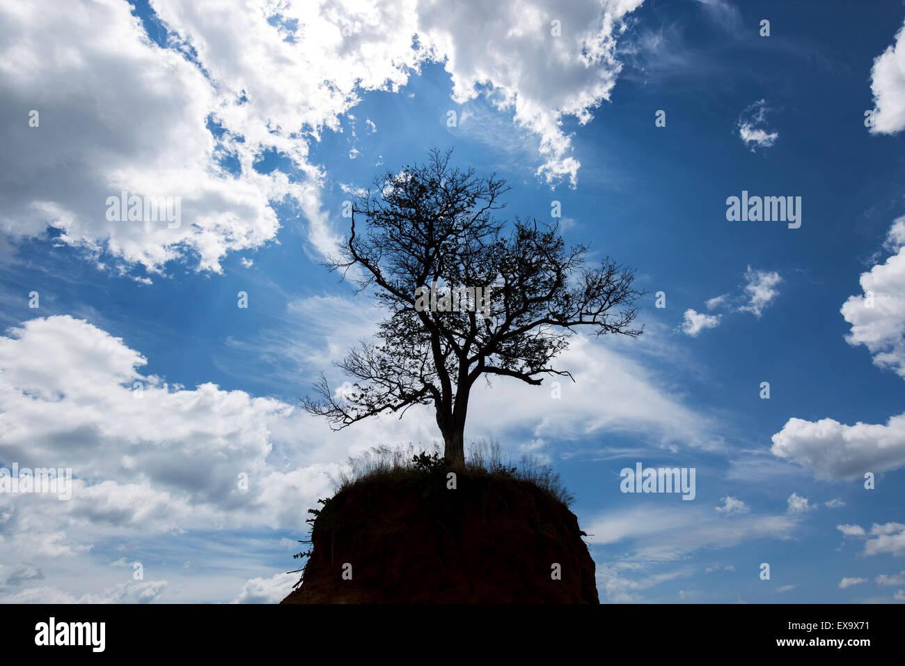Africa, Botswana, Lone tree on eroded hilltop in Kalahari Desert - Stock Image