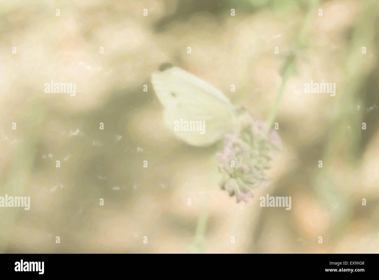 butterfly on a lavender flower - digital painting - Stock Image