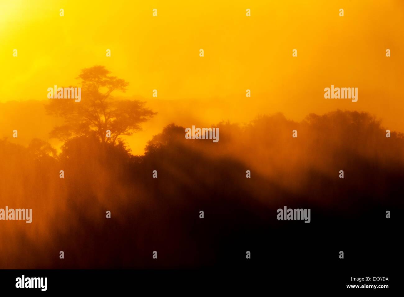 Africa, Zambia, Mosi-Oa-Tunya National Park,  Setting sun lights mist-covered trees near Eastern Cataract of Victoria - Stock Image